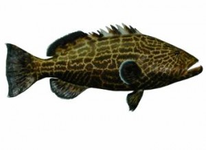 Know Your Grouper